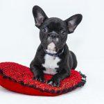 一人暮らしで犬や猫を飼うことは出来る?方法と注意点