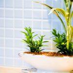 一人暮らしで観葉植物(パキラ)を飼うと、どのような効果がある?